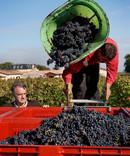 harvest Vignobles André Lurton